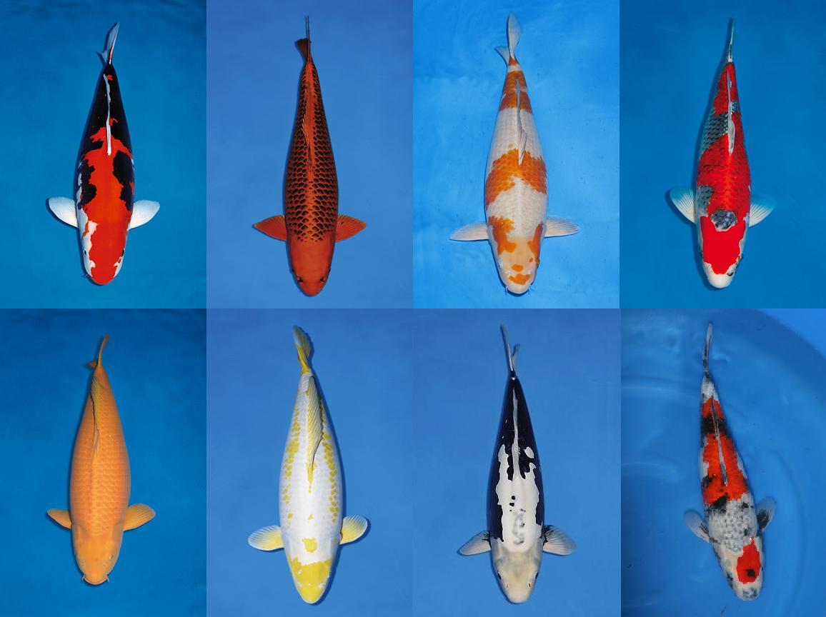 Verschillende soorten